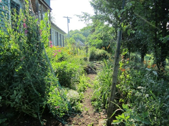 late June morning, heading into the southside garden.