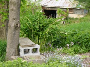 solomon seal with bench