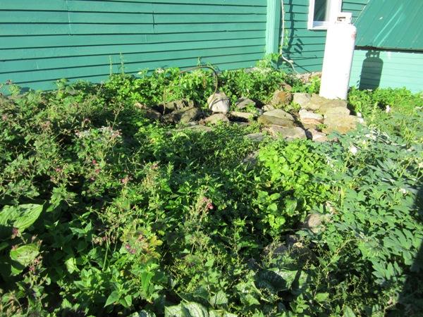 June 2012 kitchen garden jumble