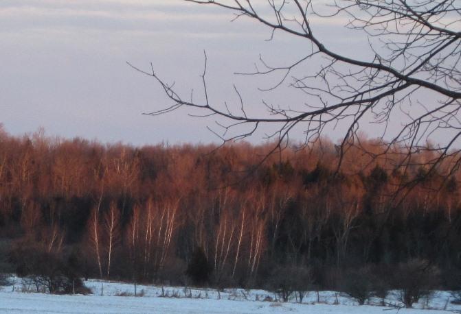 morning sun--wake up, trees!