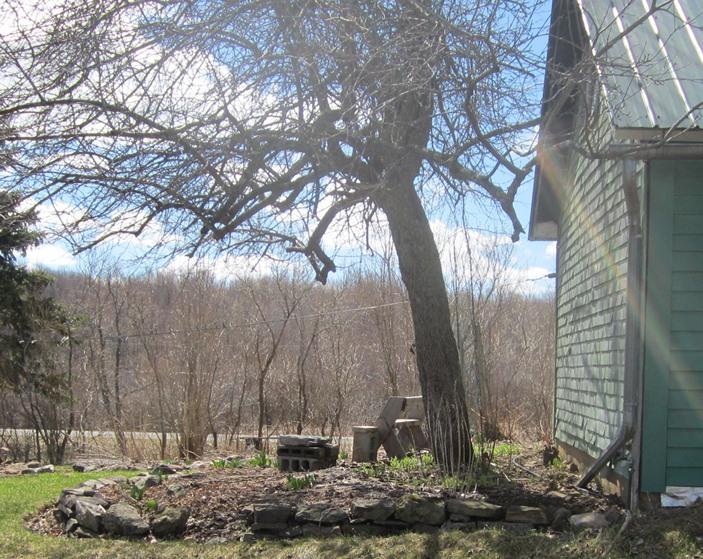 under the apple tree--back yard