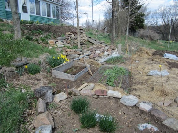 "the walled herb ""wheel""  with vigorous chives is in the foreground, but we've  decided to remove the rocks. You can see a cold frame and the spinach patch."