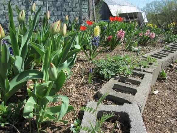 meditation garden tulips