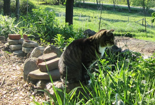 Tater listening for a varmint in the weeds