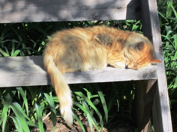 Mr. Fluff on the Aldo Leopold bench--a perfect fit.