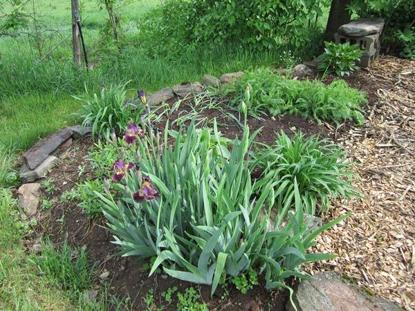northside intermediate iris patch