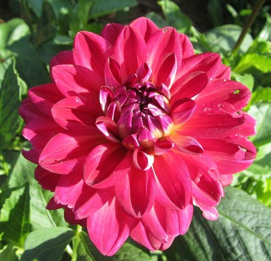 garden July 20 004