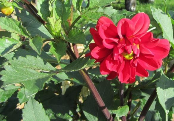 garden July 20 007