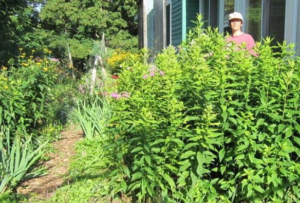 garden July 20 047
