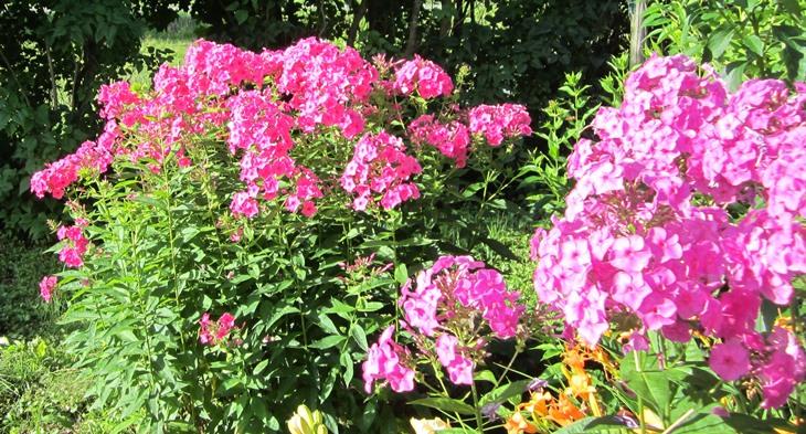garden July 20 052