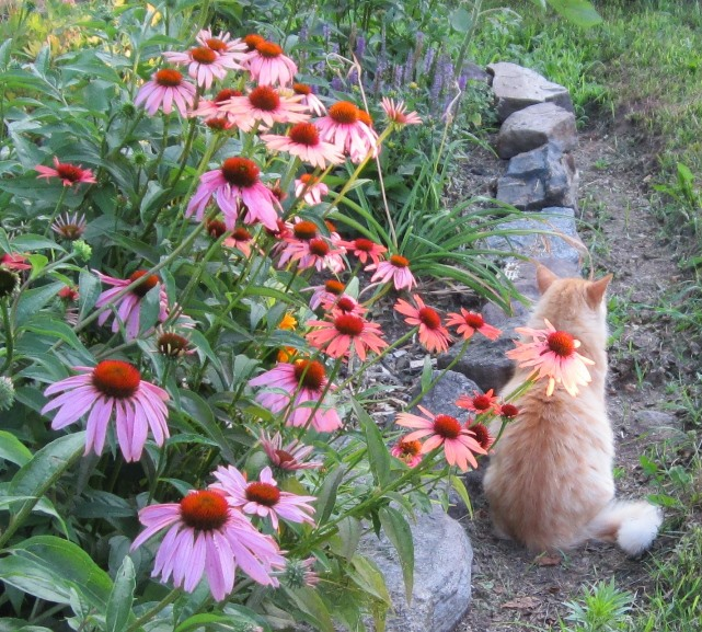 garden mid July 005