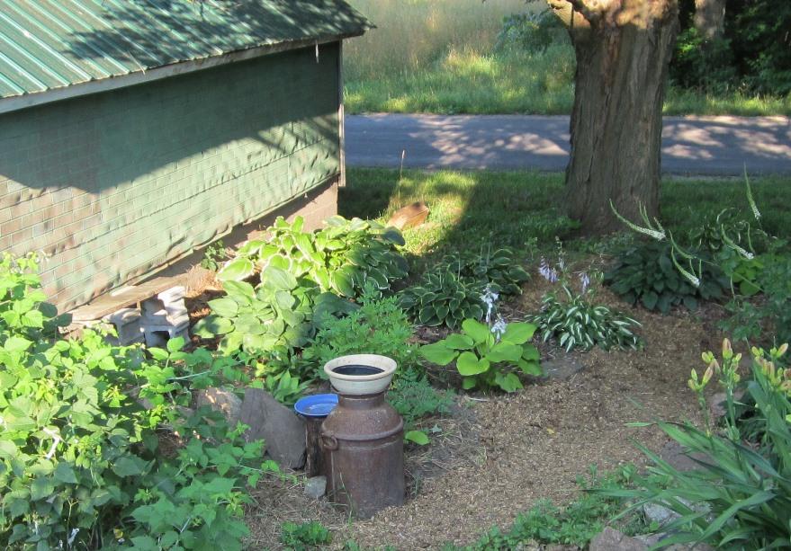 garden mid July 113