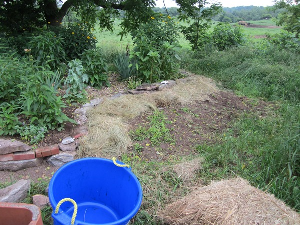 next step: added a lot of half-rotted hay.