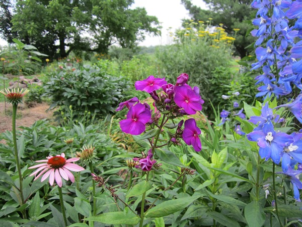 a nice bright phlox, delphinium and a coneflower