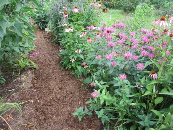 wide mulched paths