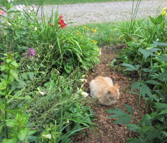 cat on a path
