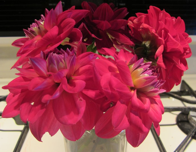 bouquet dahlias 1