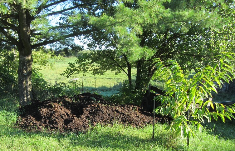 composted horse manure--a thing of beauty!