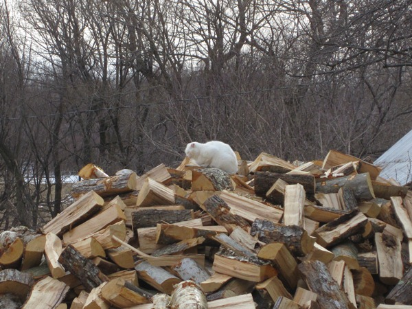 snoozing on the wood pile