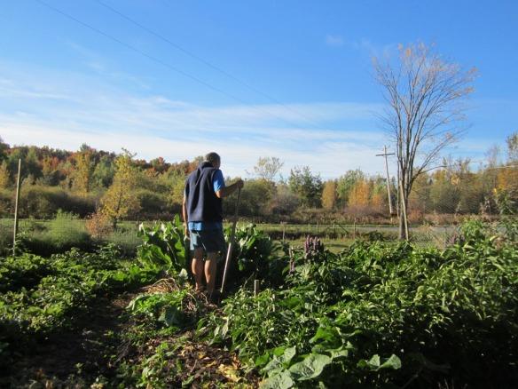 David communes with the horseradish