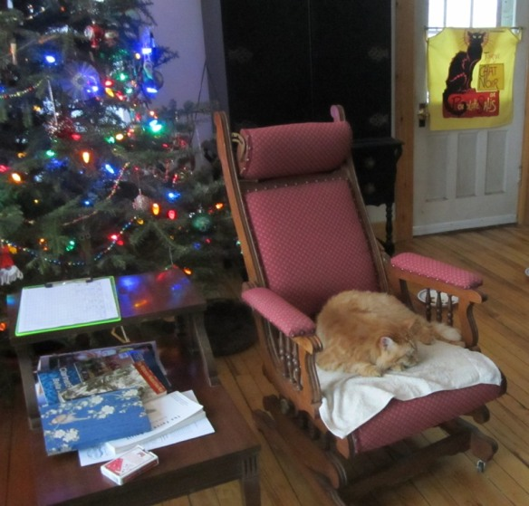 Mr Fluff relaxes by the Christmas Tree. This is when we still had electricity.