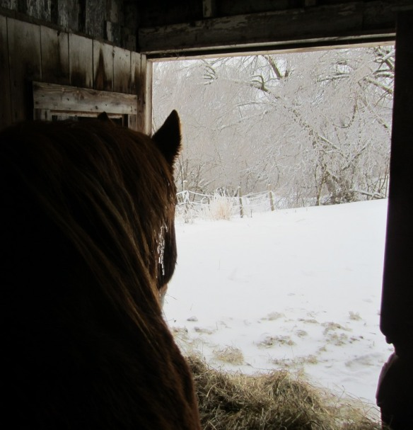 I spent some time in the barn with the horses--here is Casey, looking out at the icy world.