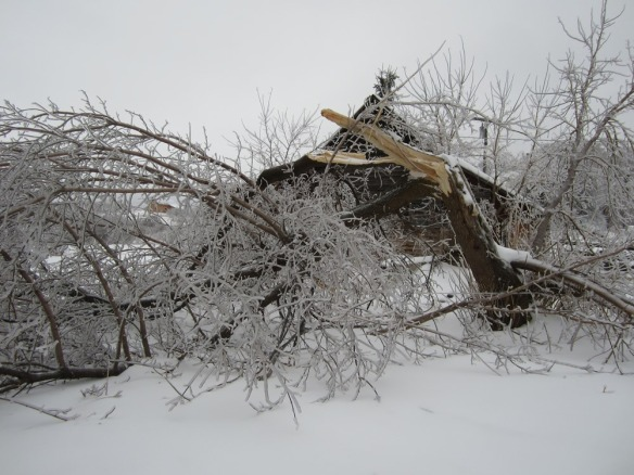 a lot of tree branches came down, and some entire trees broke under the weight of the ice. This was a box elder tree in the horse pasture.