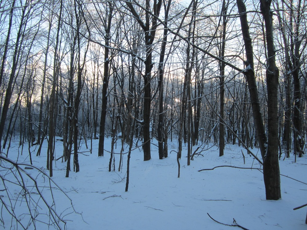 a wooded hill overlooking the upper beaver pond
