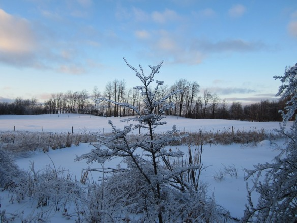 looking out over the beaver stream, into the hawk field--night coming on. this is about 4 pm.