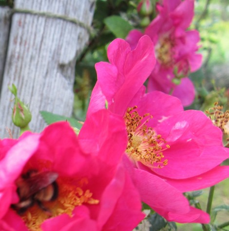 garden late June 067