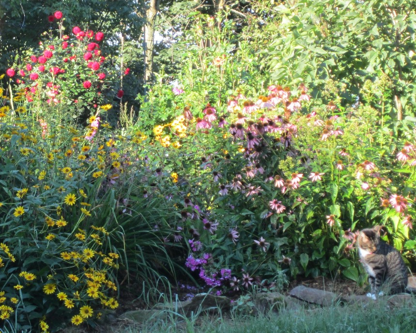 crowded with echinacea, phlox and heliopsis.