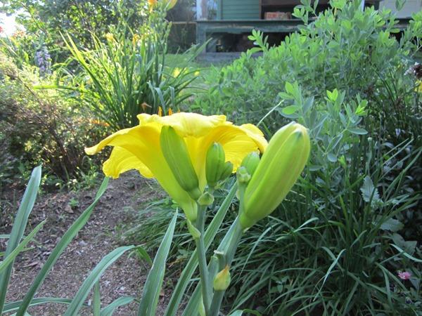 large, substantial medium shade of yellow