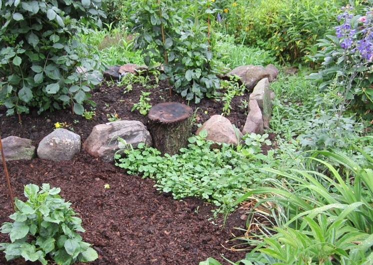 dahlias in the raised bed just after planting