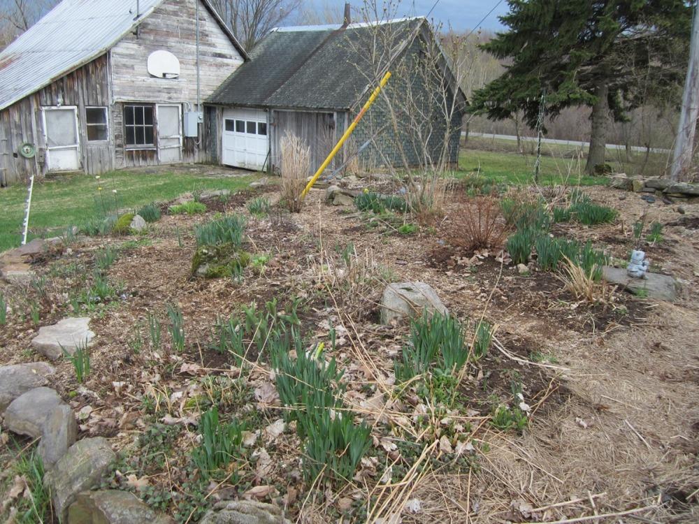 back yard, May 1