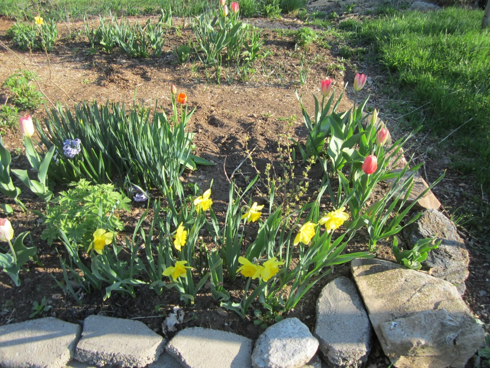 may 12 garden 054