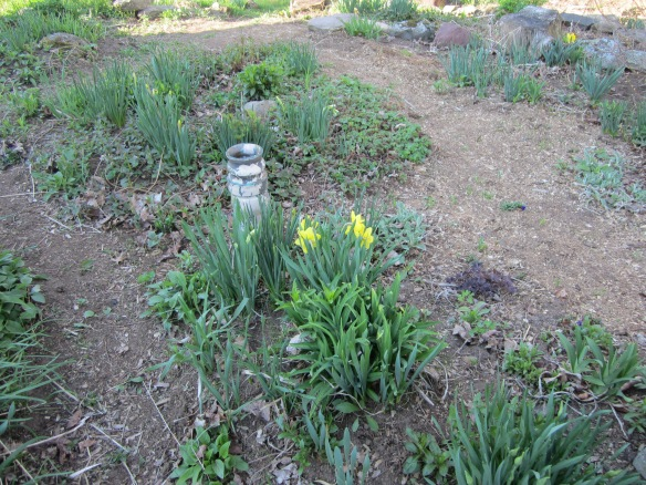 may 12 garden 077