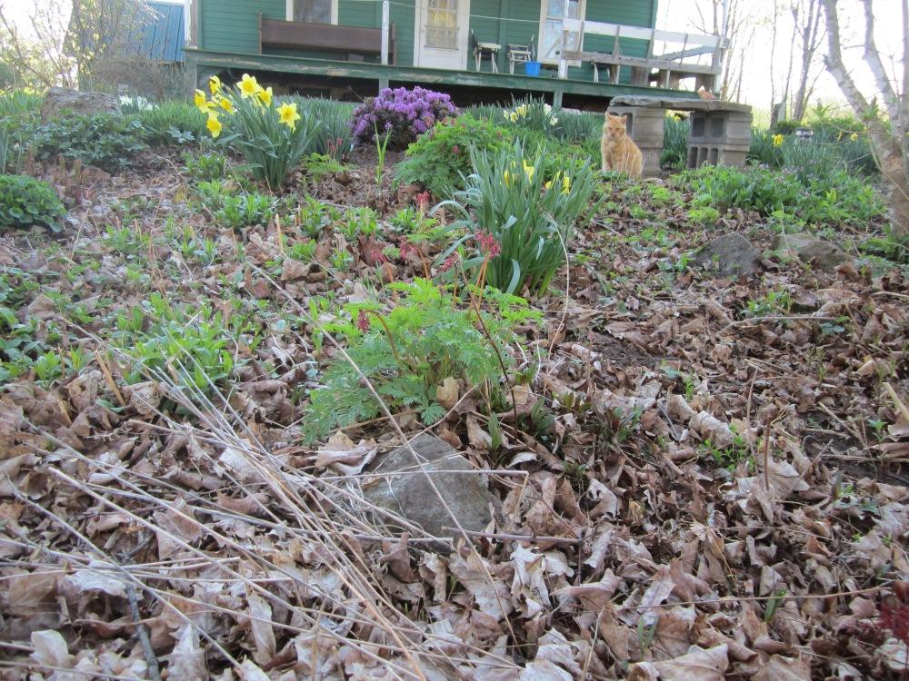 may 12 garden 095