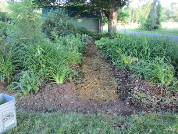 same spot after I weeded and widened the path and put down mulch