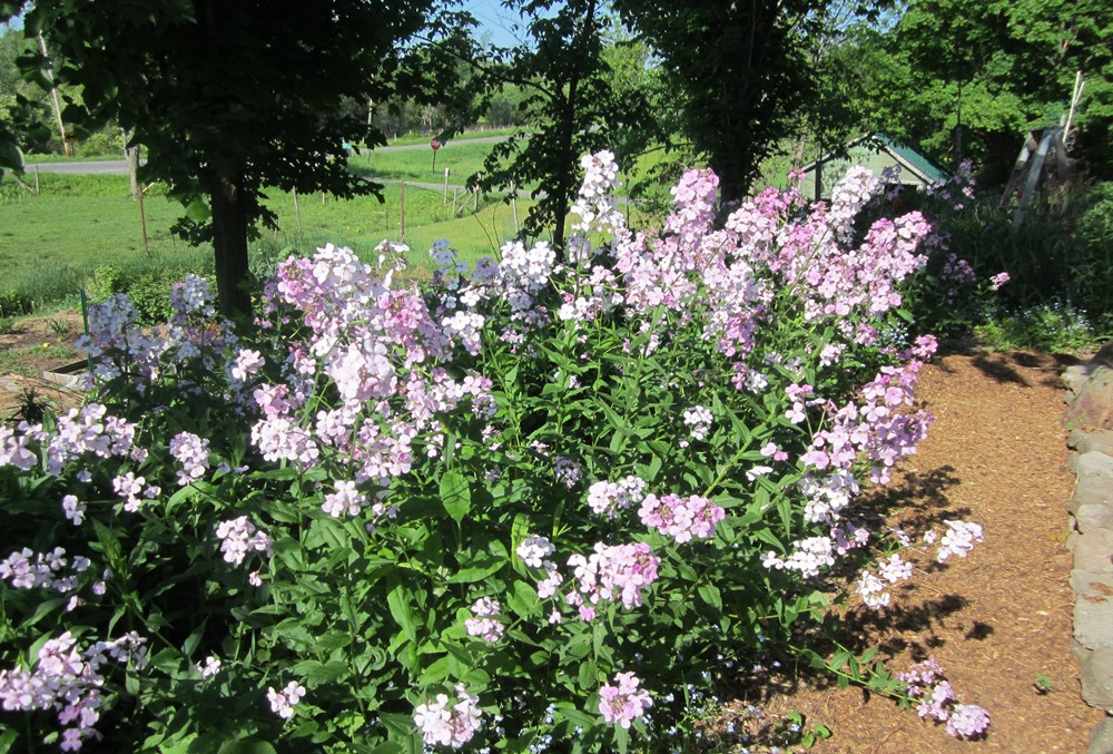 garden summery 008