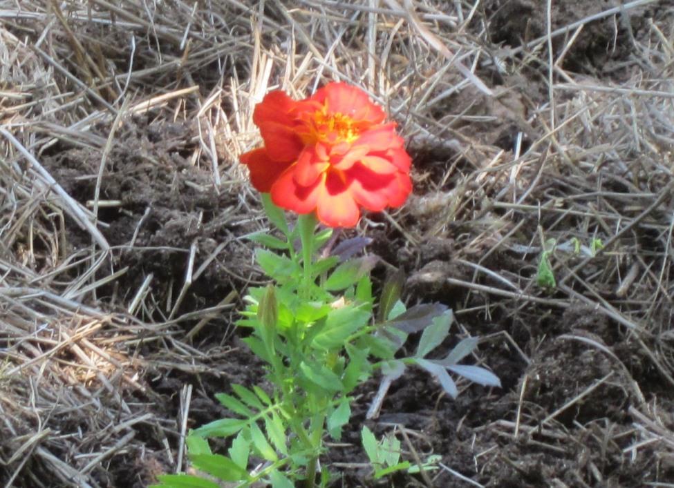 garden summery 017