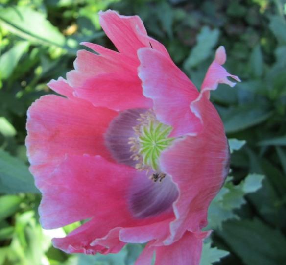 july garden 039