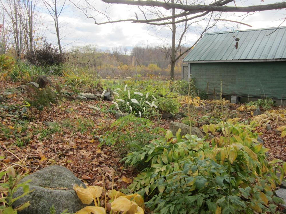 blanket of maple leaves