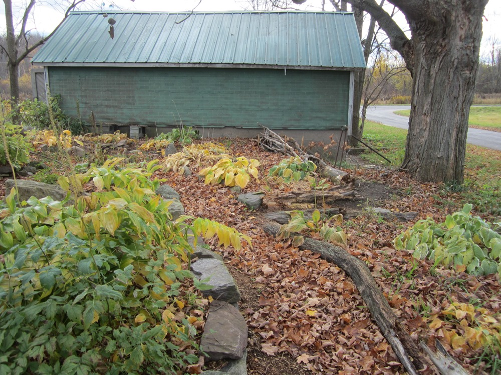 leaves, path