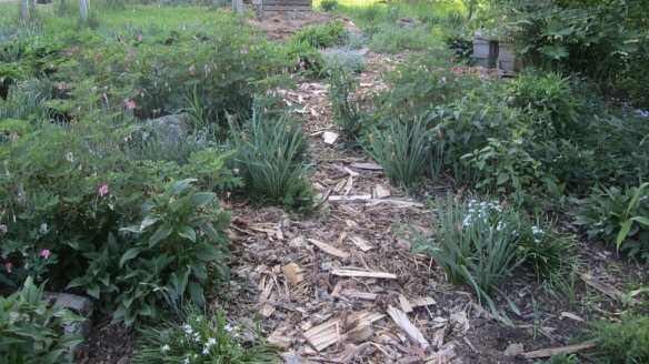 I recently dumped all of the wood shavings and bits of bark from the woodpile onto the paths of the sandy garden. It really helps to keep moisture in--this is a very dry garden, as the name suggests.