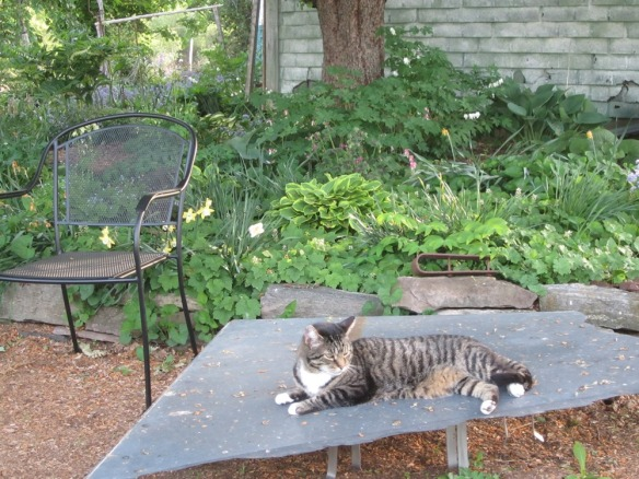Tater relaxing, as usual. That's the apple tree garden behind him.