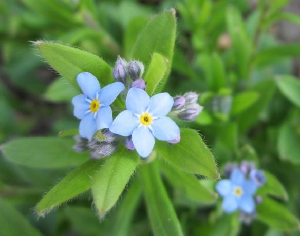 Garden May 3 051