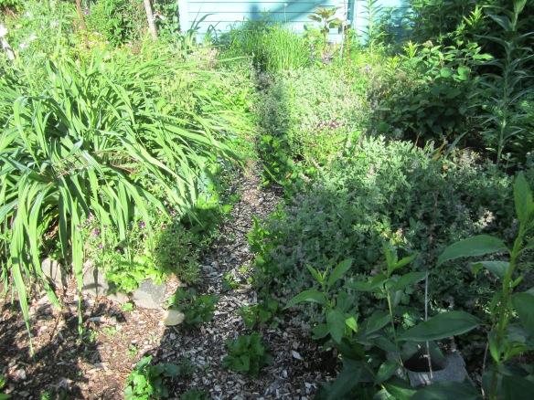 garden 331