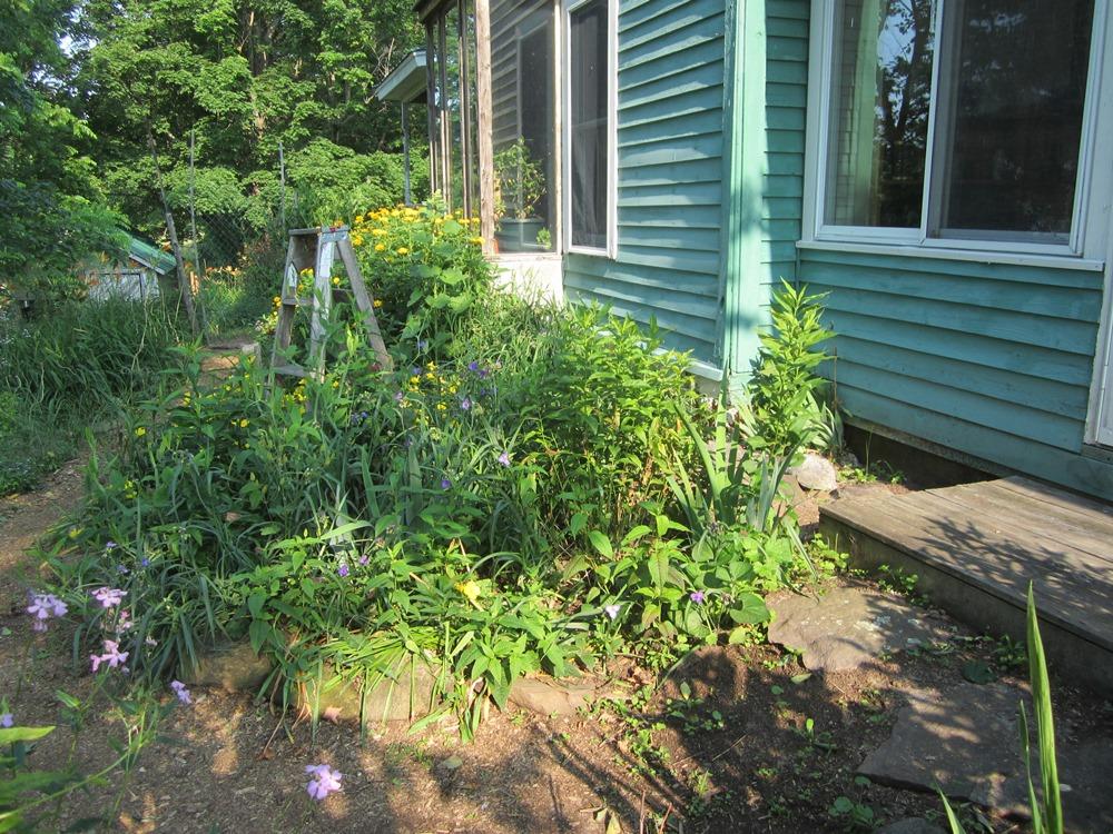 garden 377