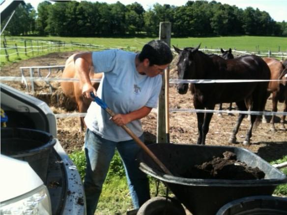 horse manure