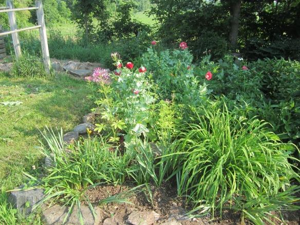 garden 436